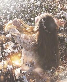 Flores de algodón.