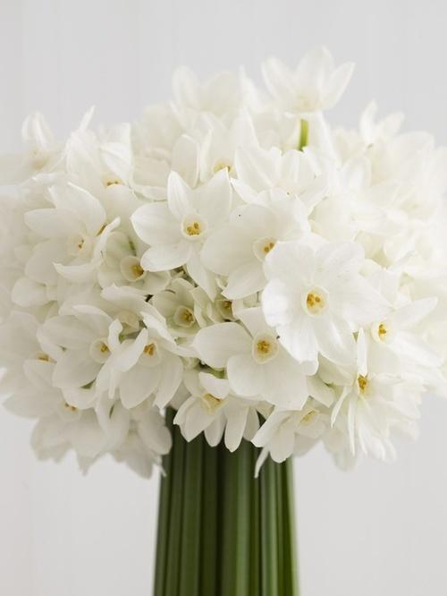 nardos-flores-blancas